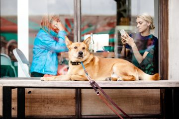 A dog sits in front of a cafe window, behind which two women are sitting at a table together